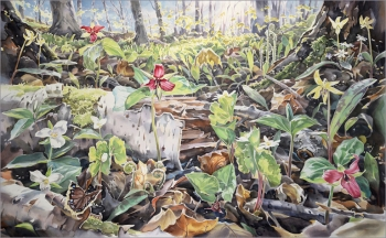 """""""What Grows Here"""", 29 x46 inches"""